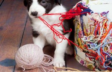 house break your puppy