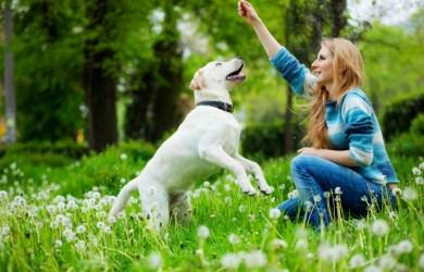 woman training dog2