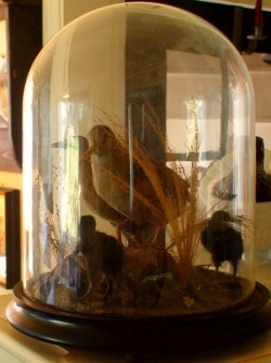 Small Of Glass Dome Display