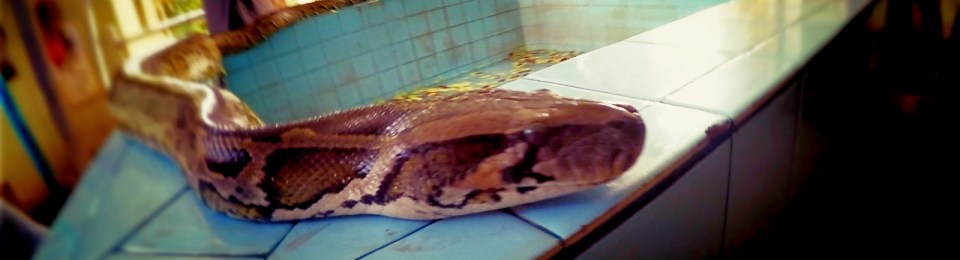 Myanmar-The Snake Pagoda: Attack of the Burma-Constrictors