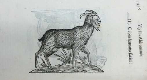 "This image illustrates a ""goat with the face of a human,"" one of a series of hybrid, ""monster births"" Ulisse Aldrovandi depicted in his History of Monsters (Bologna: Nicolai Tebaldini, 1642). Credit: John Martin Rare Book Room, University of Iowa."