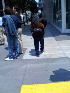 Crazy cat guy with cat on backpack