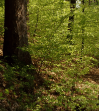 Forest Walk Meditation Music, Featured Article