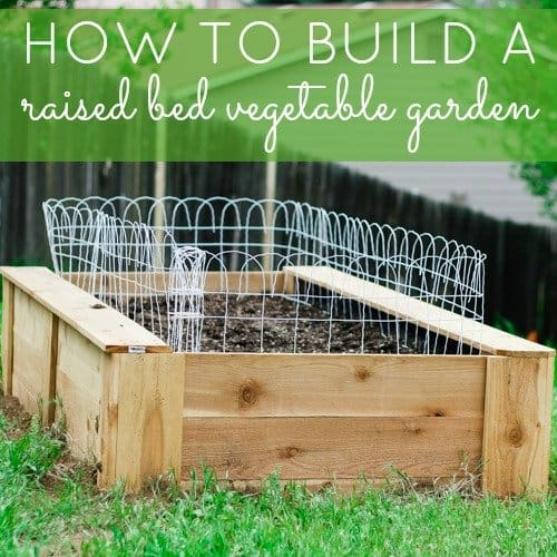 Daily mom how to build a raised bed vegetable garden for Building a raised vegetable garden