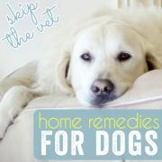 Dog Remedies-pin image
