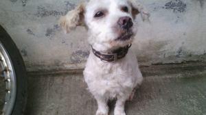 TJ puppy
