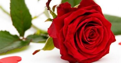 roses_870x320_scaled_cropp
