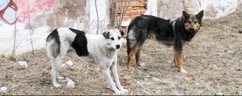sochi dogs_870x320_scaled_cropp