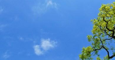 Oak_tree_in_the_spring-2_870_320_cropp