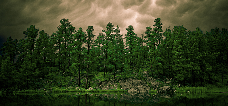 Dakota Visions Photography - Black Hills, wildlife, and western photography for sale