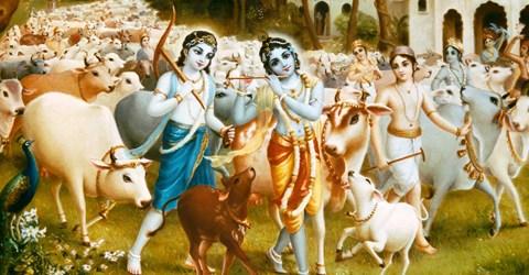 Dairy Krishna