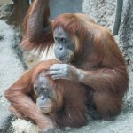 The importance of grooming in human animals and the other primates.