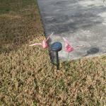 Pink flamingos and solar lights