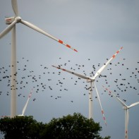 Denmark leads the way in several industries, including wind energy.