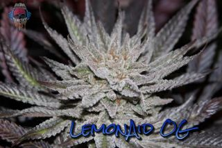 LemonAid OG