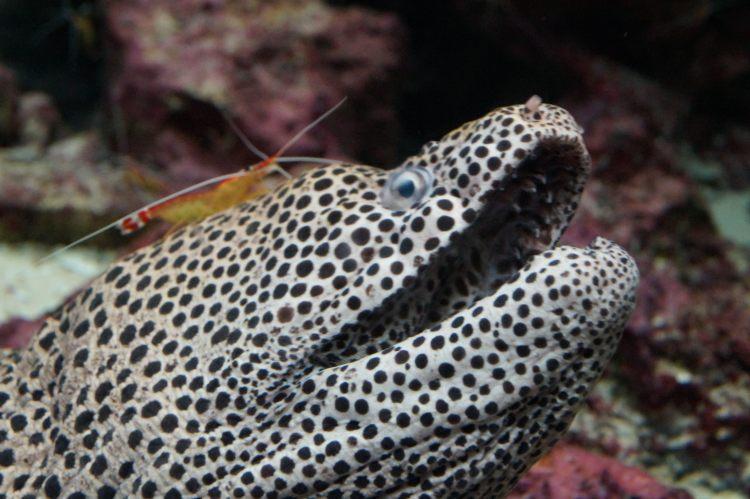 沖繩美麗海水族館 海鰻與小蝦