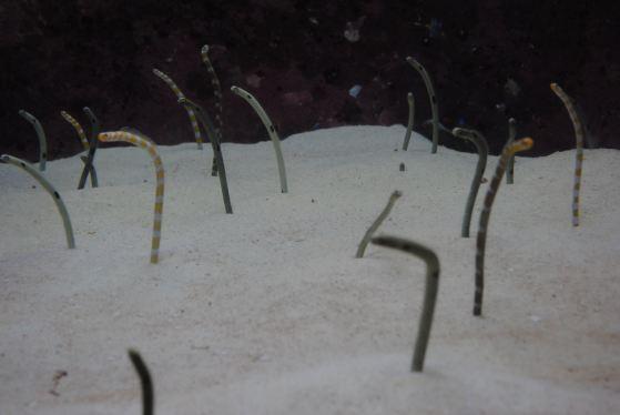 沖繩美麗海水族館 海中蛇