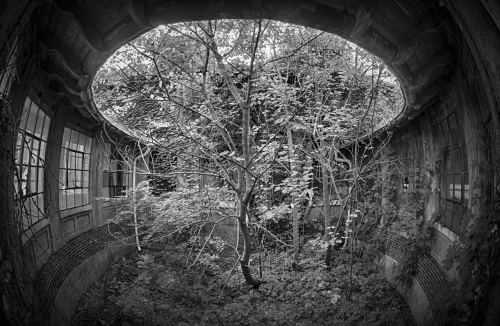Ellis-Island-Hospital-Building-with-Tree-photo-Tony-Sweet