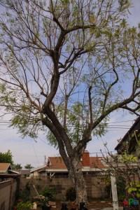 Mr. DAPs Railway Tree Removal-2