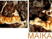 MAIKA CAT