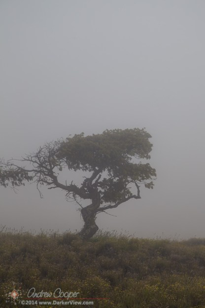 Mamane in the Fog
