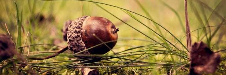 acorn-header