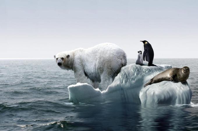 disadvantages-global-warming_1b94cbd5cfe010f3
