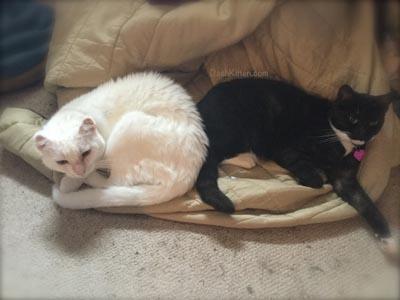 Dash Kitten Miranda and Harvey