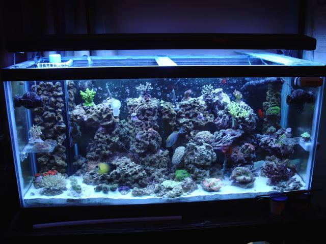 Below is the same tank 6months aftercycling the tank