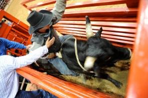 bullriding3