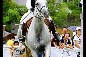 [高雄]2010高雄市長杯障礙超越馬術錦標賽(積分第三站)競賽