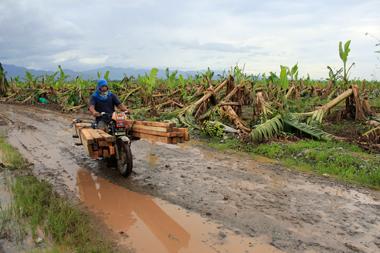 Typhoon Pablo survivors plant 1, 500 trees to nourish Pablo-ravaged communities