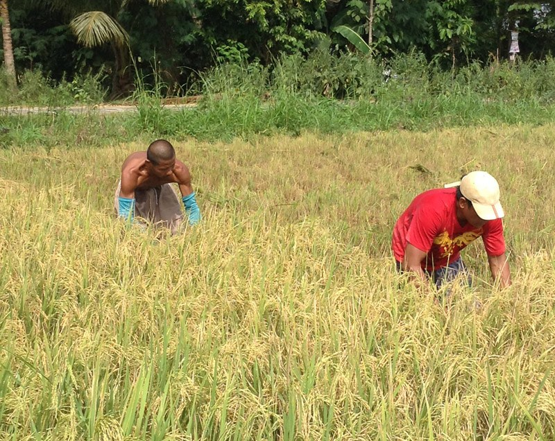 Advocates see family farms to achieve food security