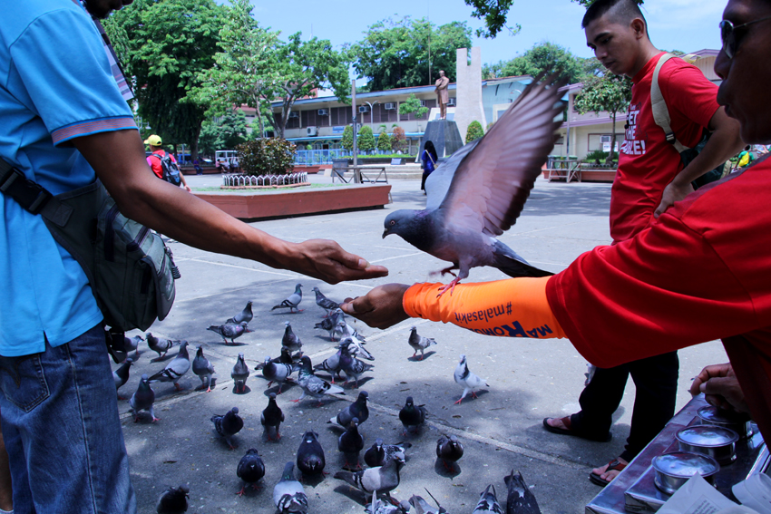 Passersby at the Rizal Park stop for a moment to feed the doves. (Ace R. Morandante/davaotoday.com)