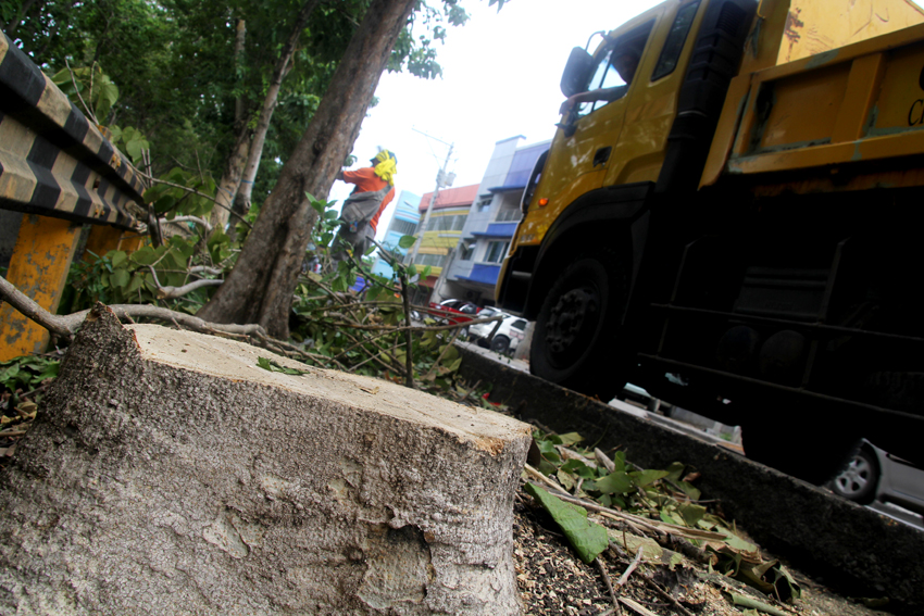 The City Engineers Office and the City Environment and Natural Resources start to cut 22 dead trees along Dacudao Avenue in Davao City. On Friday, 12 trees have been cleared off the sidewalks. (Ace R. Morandante/davaotoday.com)