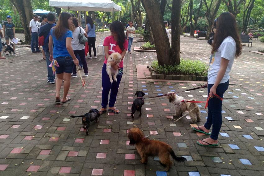 Animal bites surge 32% in Davao region in 2016