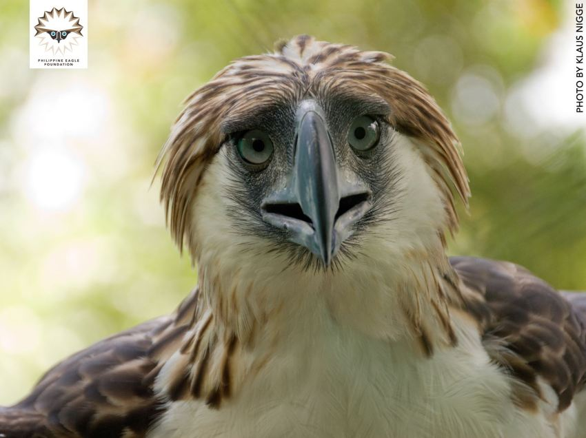 Stricter laws pushed to protect raptors in Asia