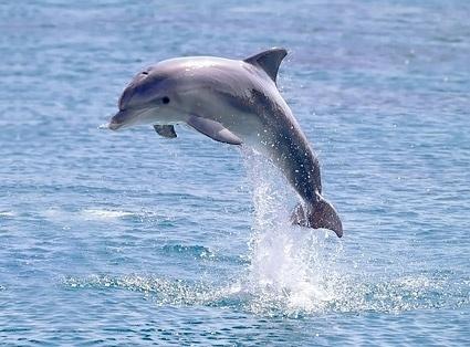 Dozens of dolphins turn up on Misamis Oriental coast
