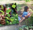'Counter-narrative': book on Lumad school's agri education counters red-tagging