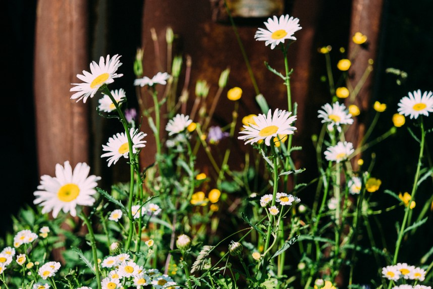 Wildflowers In Wild Places