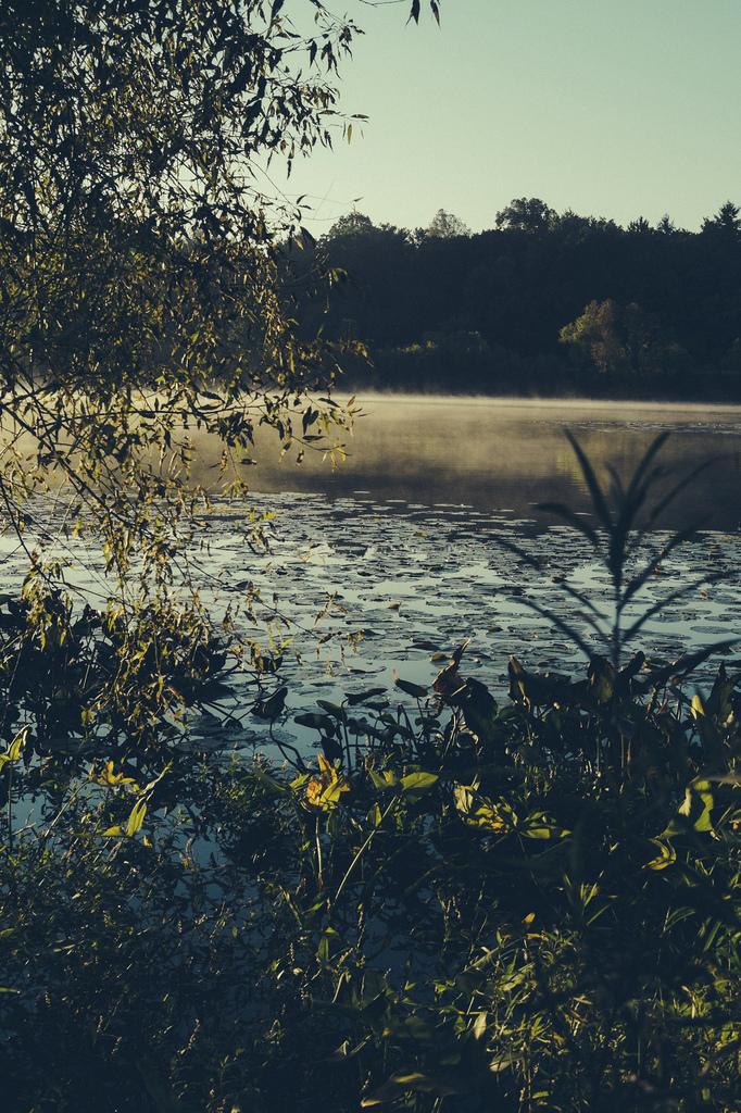 Mill Pond - Concord, MI