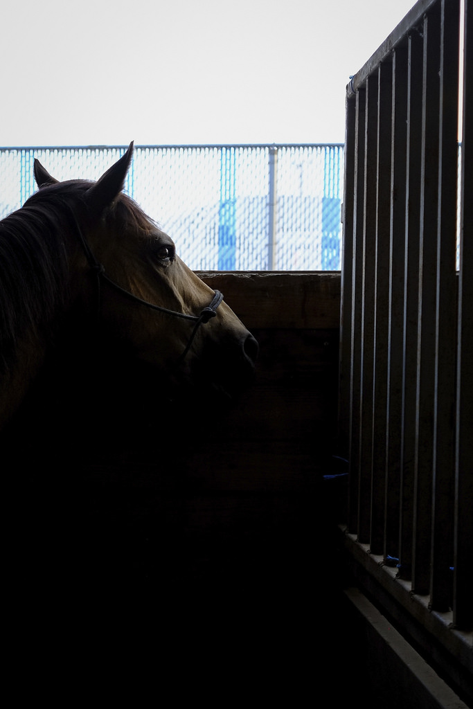 Horse In Waiting