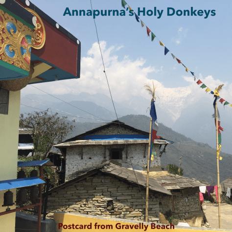 Annapurna's Holy Donkeys –Postcard #67