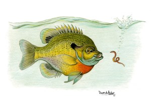 Bluegill's Big Surprise