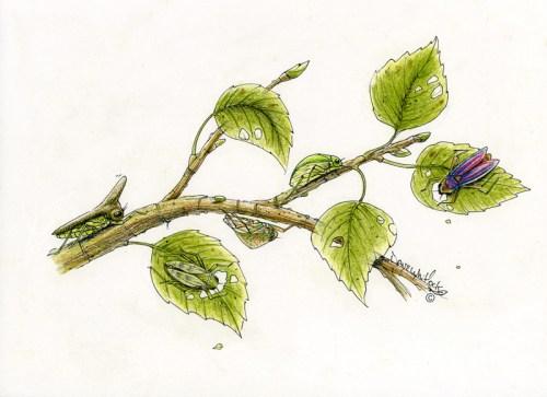 Leaf Hoppers Delight