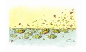 Sunfish--Sunny Autumn