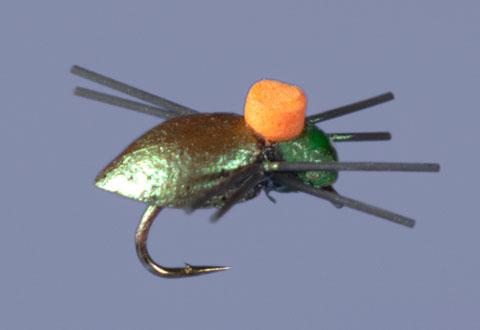 whitlocks-bright-spot-beetle