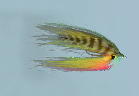 whitlocks-sheep-minnow-deep-sunfish