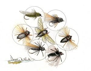 Cicadid-and-flies