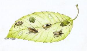 Leafhopper-Leaf